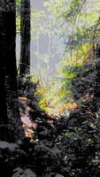 Big River forest