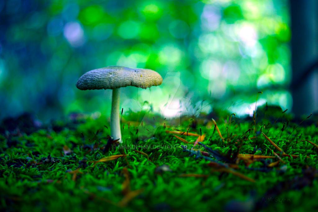 Glimpsing Wonderland by Mandi7MM