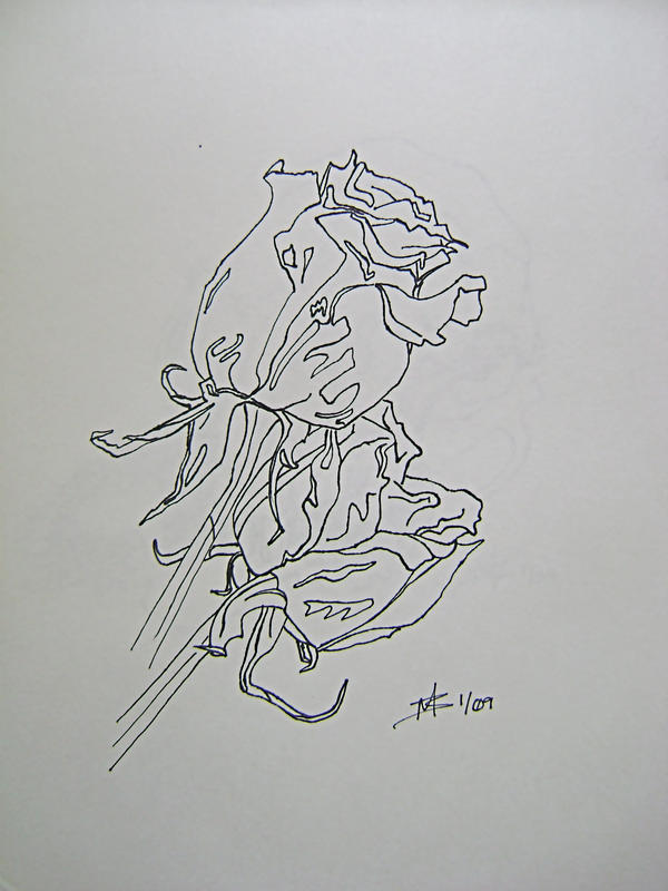 Contour Line Drawing Rose : Roses contour by awsmdragonqueen on deviantart