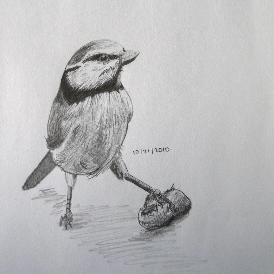 Bird sketch by awsmdragonqueen
