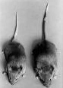 indigo-mouse's Profile Picture