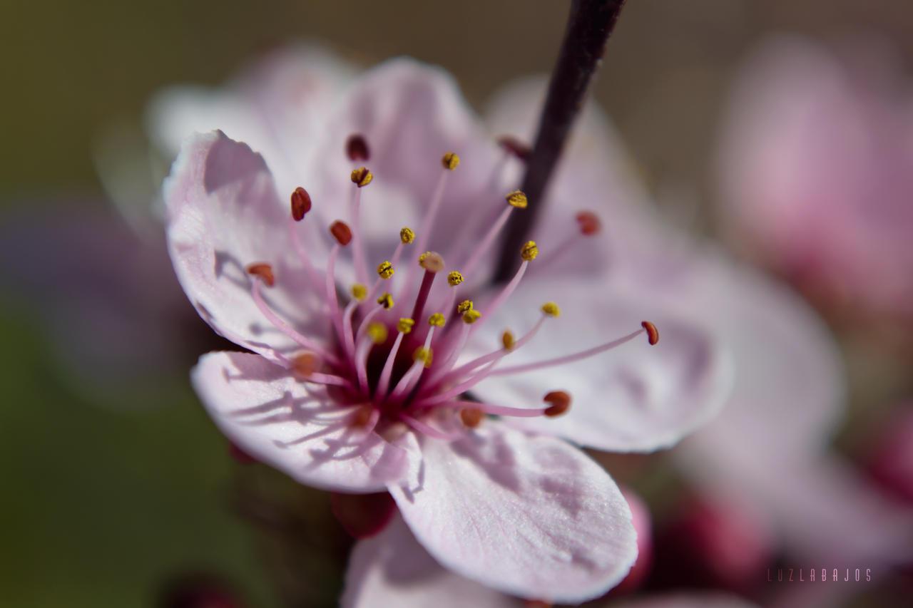 Spring by Neywa