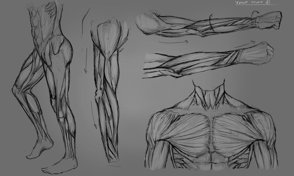Anatomy practice by Neywa