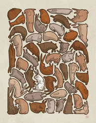 Forty-Seven Brown Bunnies