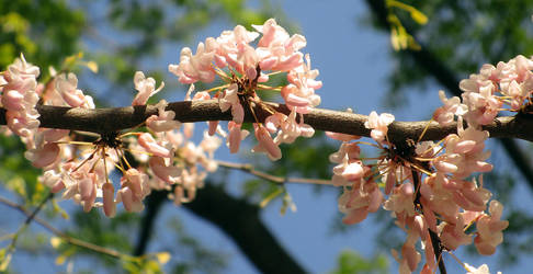 Rythm of the spring by shilaktit