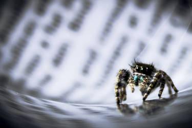 Spider Buddy