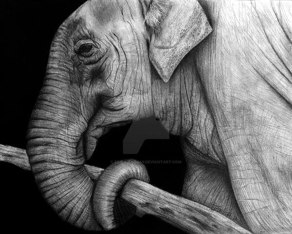 Elephant by Erika-Farkas