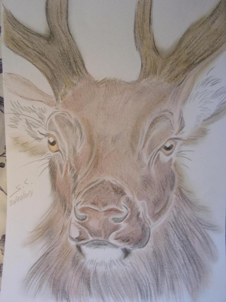 red deer by teazuko