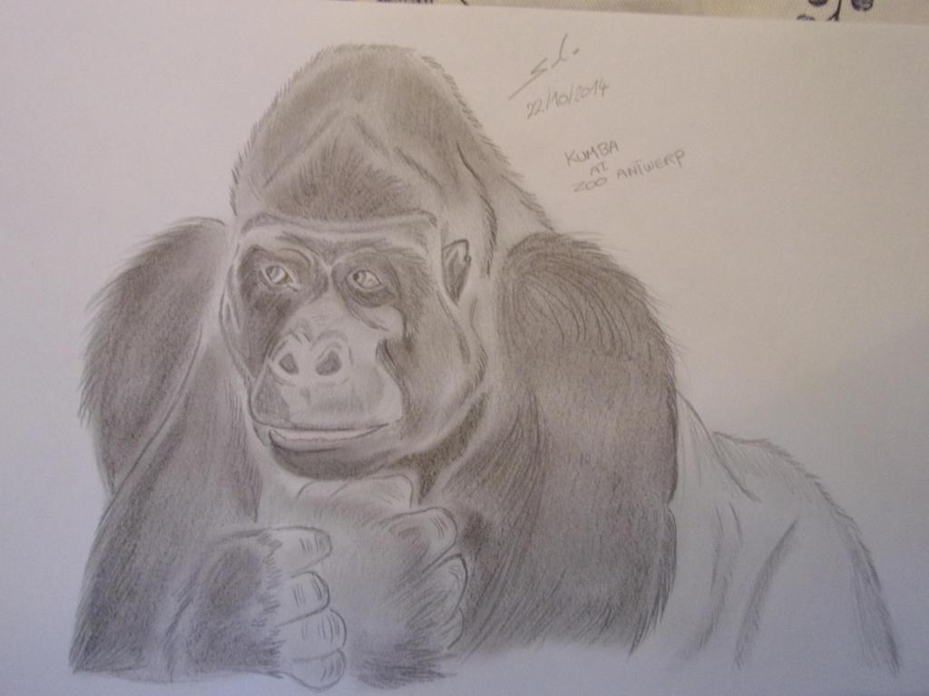 gorilla by teazuko