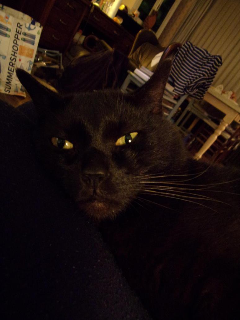 my cat moech by teazuko