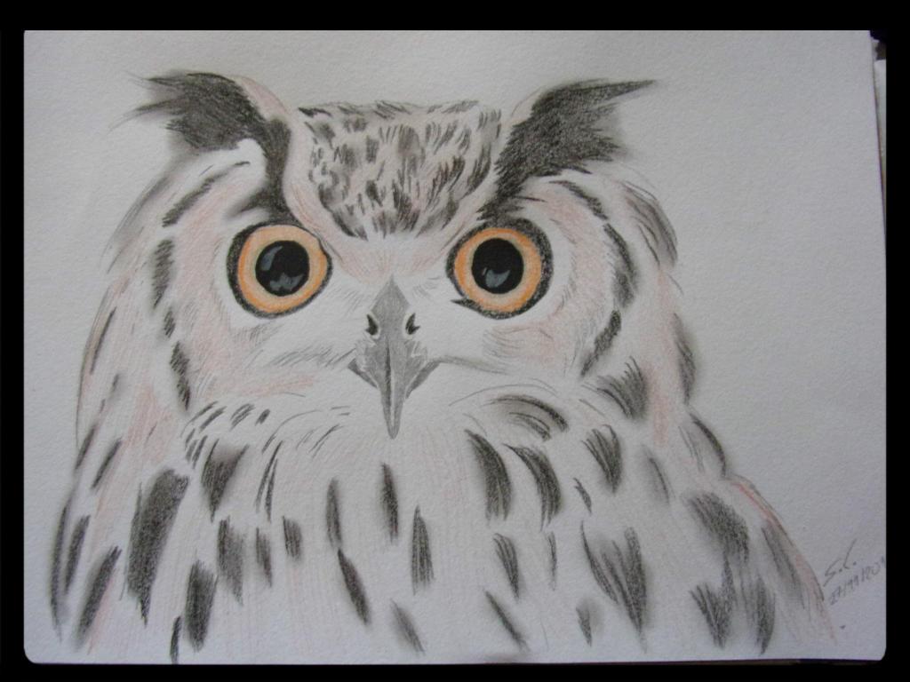 owl by teazuko