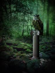 Cyclopean Owl