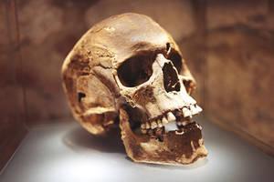 Skull by gbiermanski