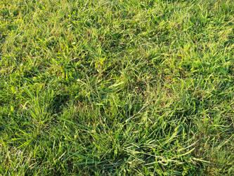 Grass Texture by tarastarr1