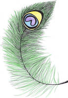 Colored Peacock Feather by PeacockLover44