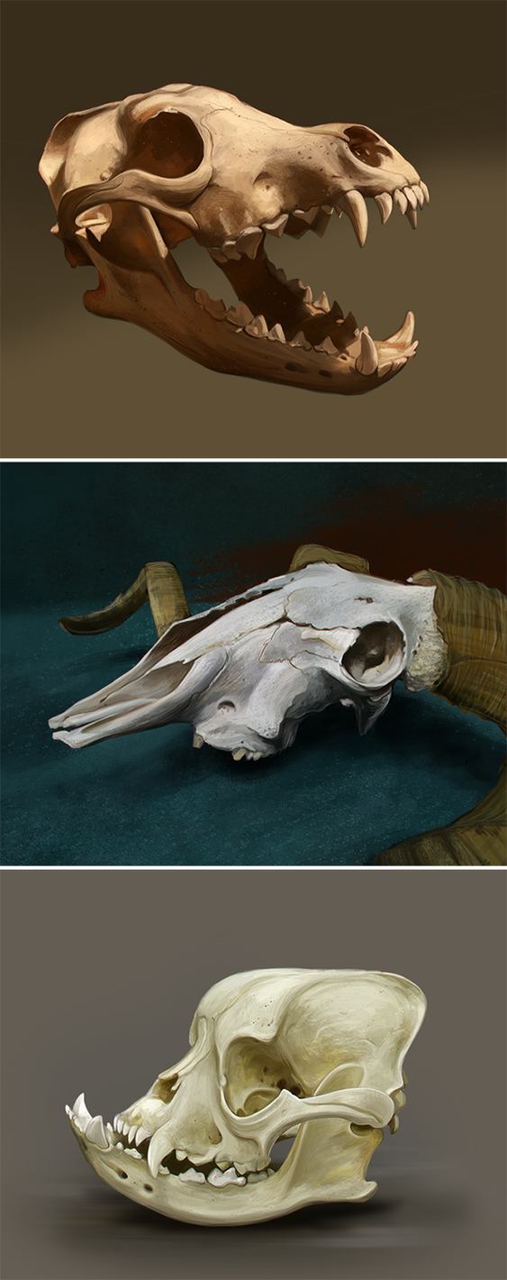 Skull Study by StoicSquid