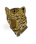 Armani - Big Cat Rescue