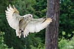 shiny wings by Daniel-Volpert