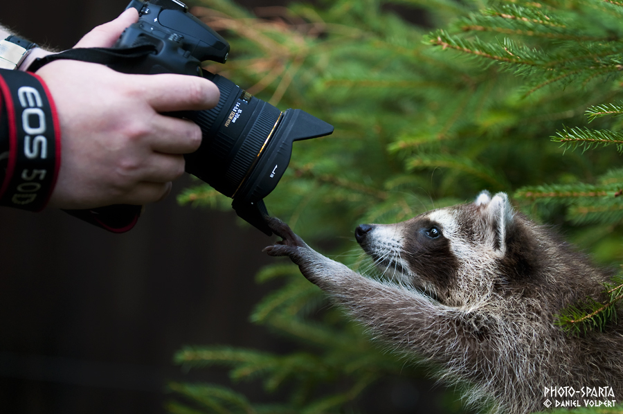 Gimme that camera by Daniel-Volpert