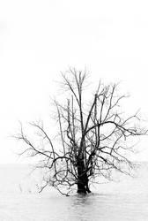 i tree by kanekoichi