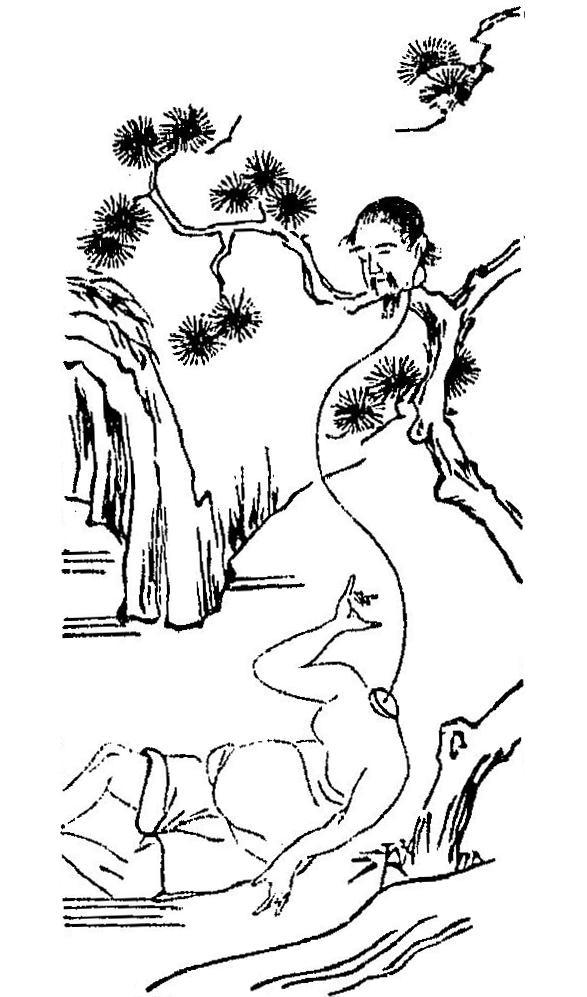 Árbol en el Wakan Sansai Zue, por Terajima Ryōan