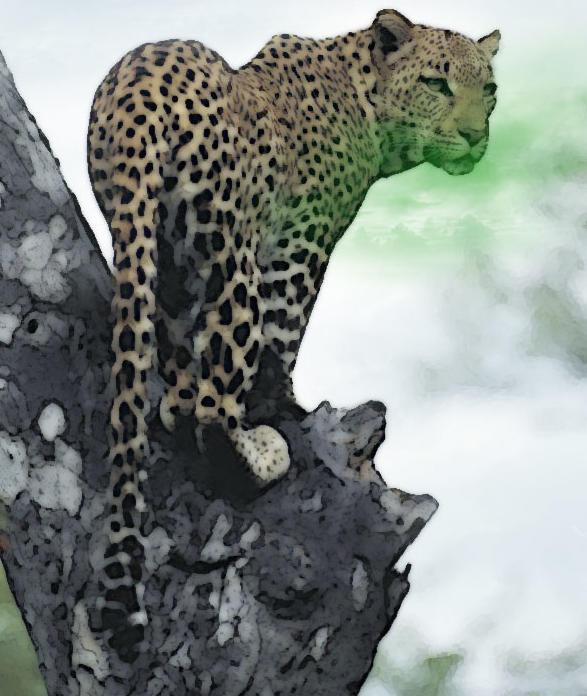 Nundu con anatomía idéntica a la de un Leopardo, por Hanazuke