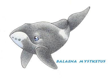 Bowhead Whale Clip Art by neoecco