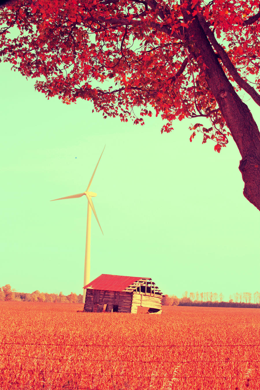 Barn In The Fall by Cute-And-Bright