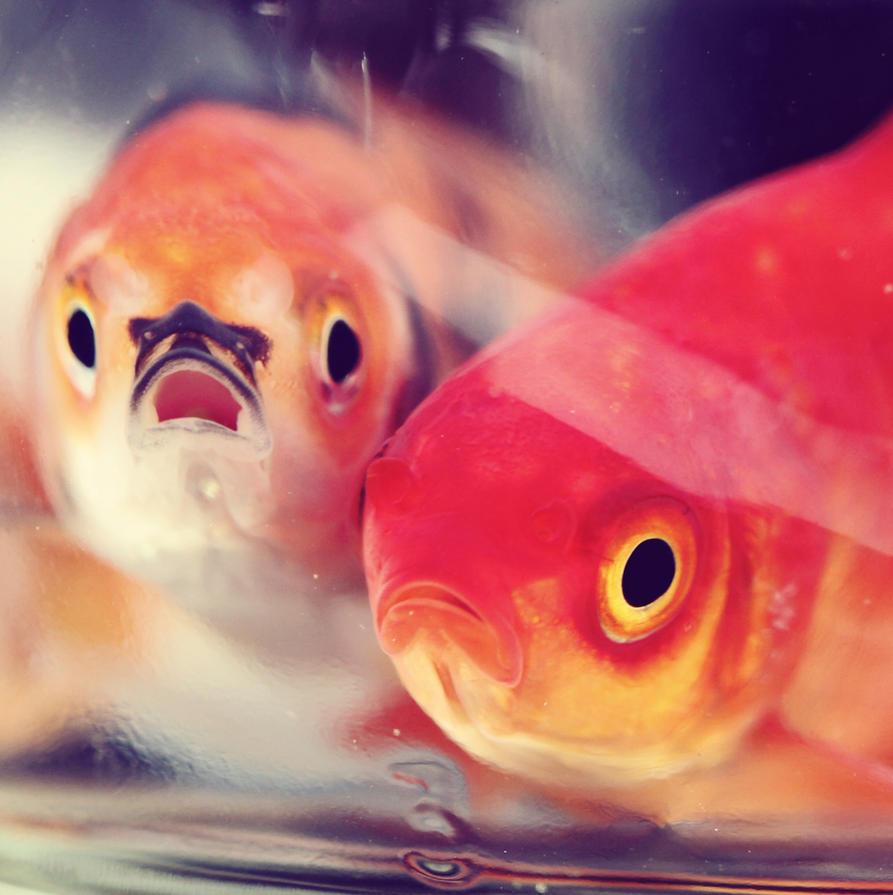 Shocked Fish.