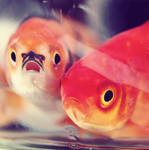 Shocked and Dismayed Fish