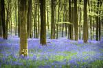 Spring Woodlands