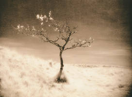 IR Tree in Lith