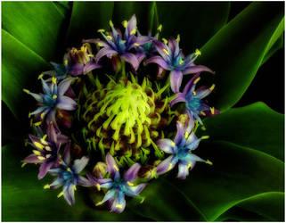 CARIBBEAN LILY 3 by THOM-B-FOTO