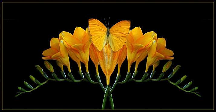 MELLOW YELLOW by THOM-B-FOTO