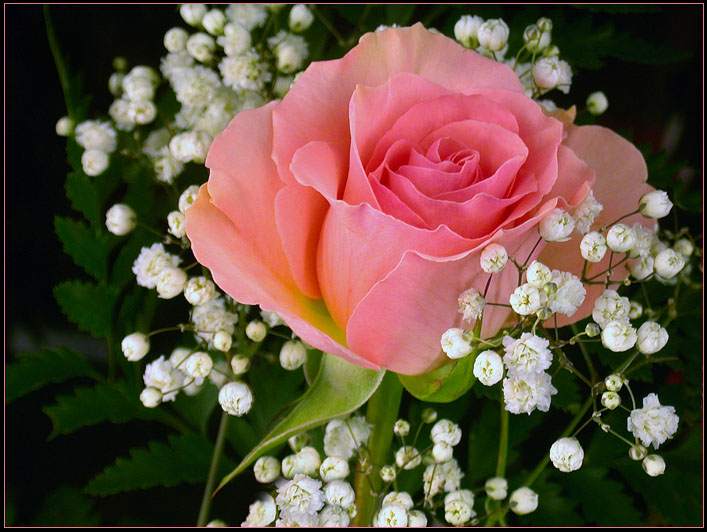 pink rose bouquet by thombfoto on deviantart, Beautiful flower