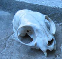 The cat skull by Deathbycardboardbox