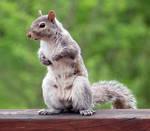 Squirrel Stock 2 by Protokol-Stock