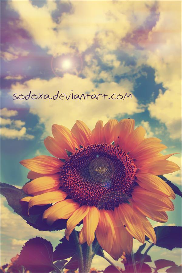 Mirror Of The Sun by SoDoXa