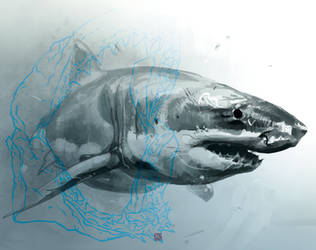 AE BT Shark02 by barontieri