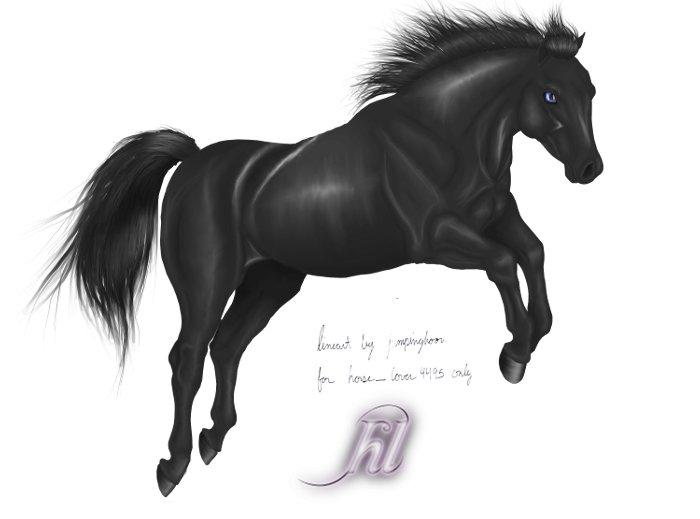 Black Horses Jumping Black jumping horse byBlack Horse Jumping