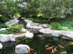Japanese Garden - Koi Pond