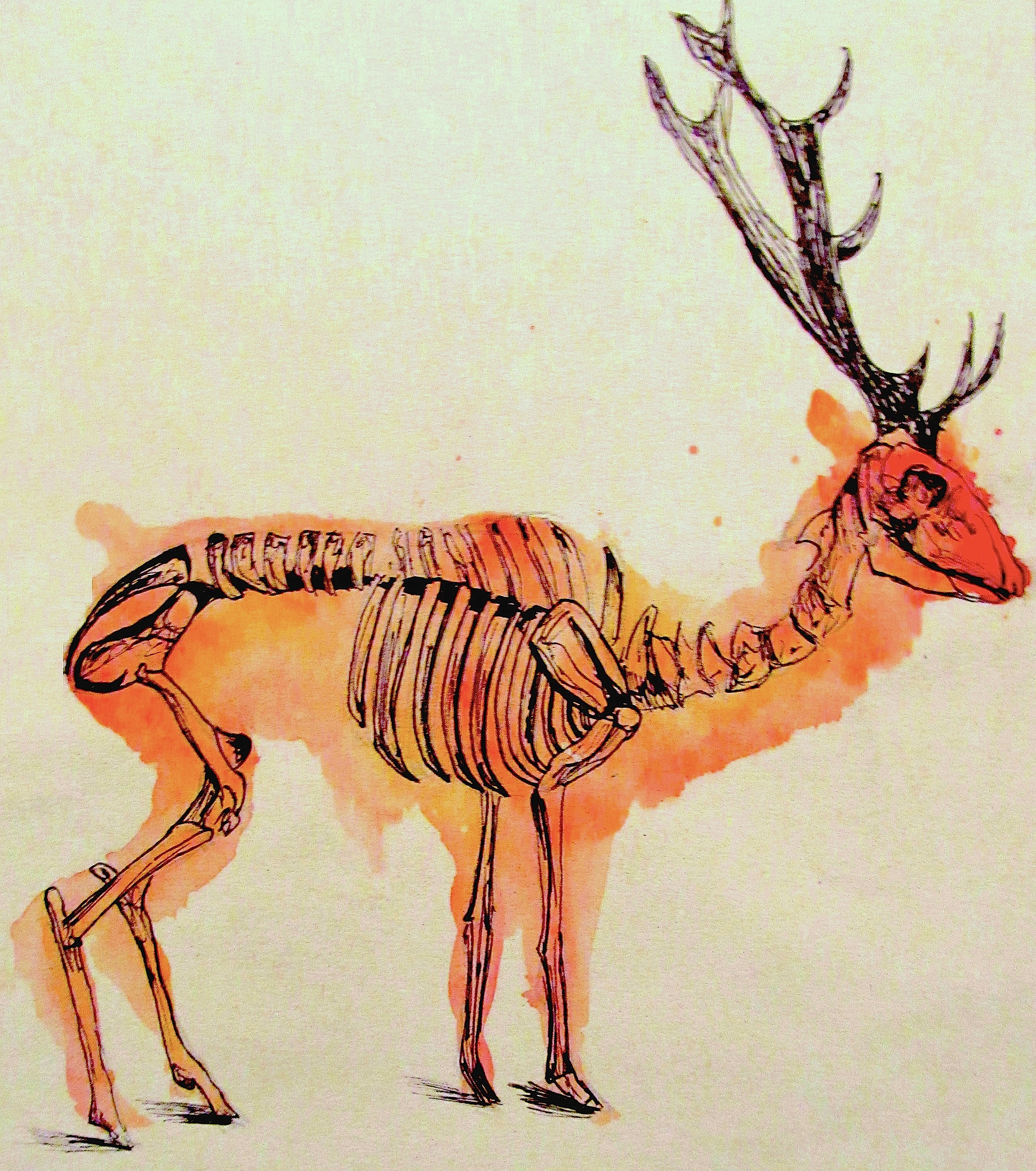 Stag Skeleton by MARKer-PEN