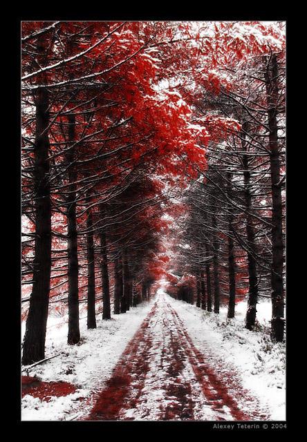 Bloody Autumn