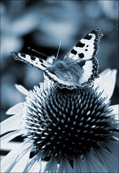 Yoga for the Butterfly