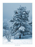 Blue Winter III by Frider