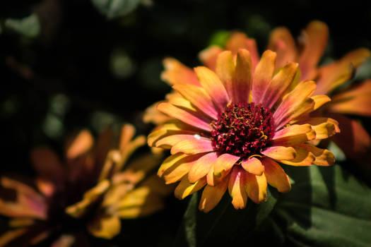 Brilliant and inspiring flower