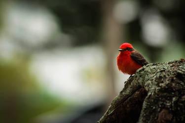 Red boy by Vidamasu