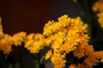 Dedicated to yellow color by Vidamasu