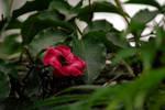 Hidden into the leaves by Vidamasu