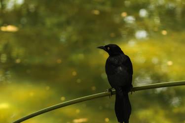 Posing on a branch
